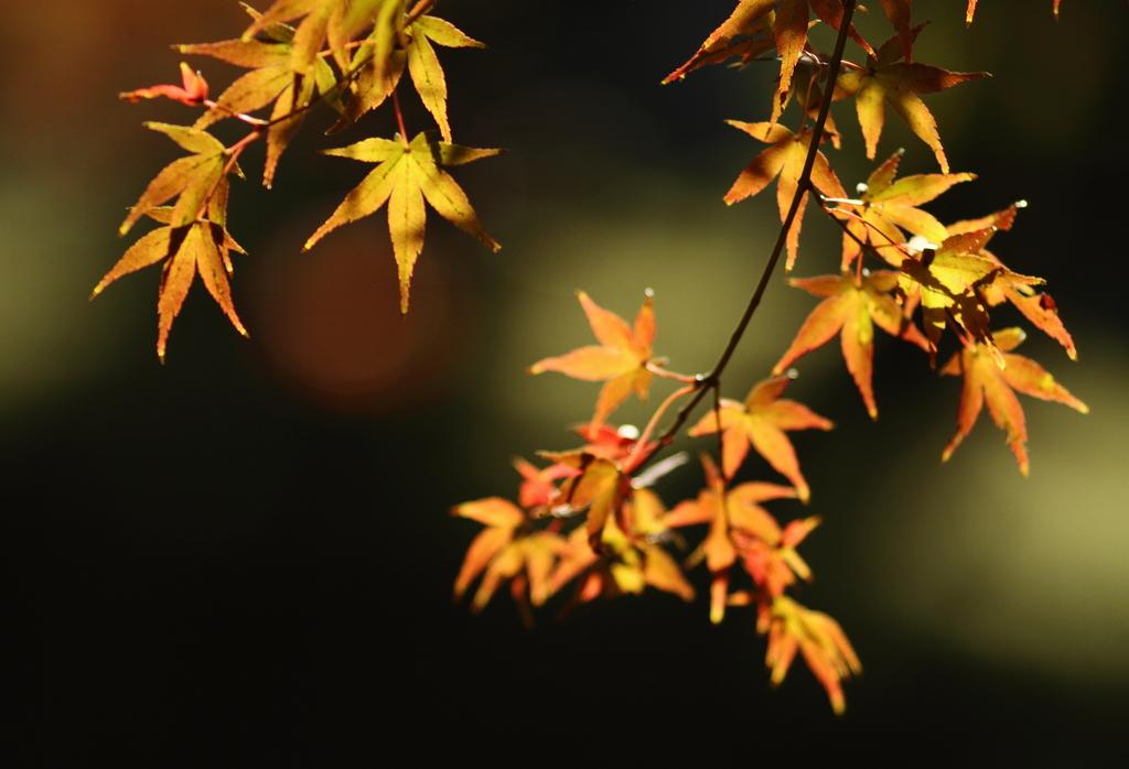 秋の色づき1