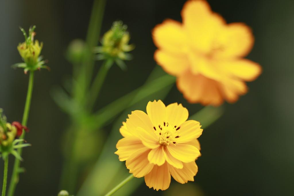 季節の花2