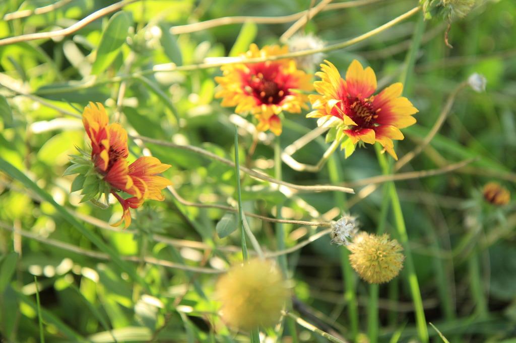どこにでも花が咲く
