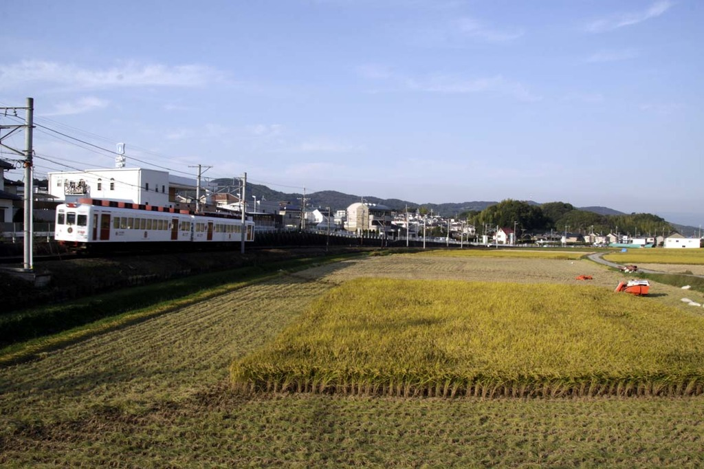 いちご電車と収穫