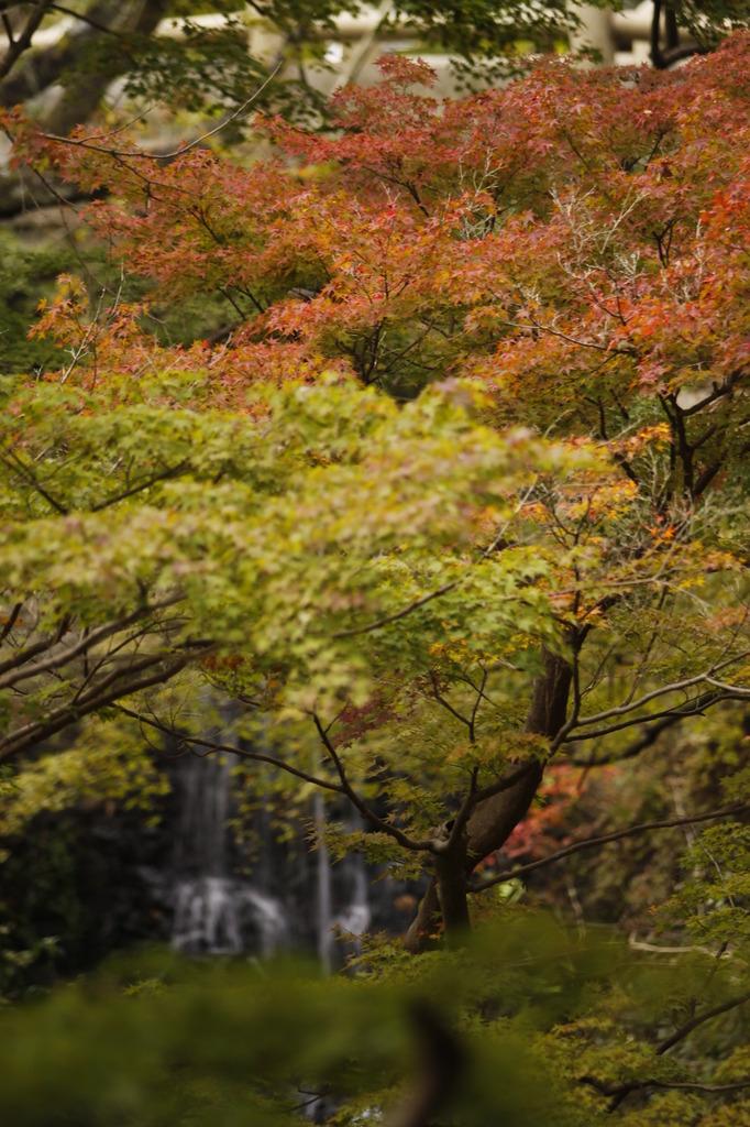 滝のある風景