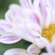 CANON Canon EOS 50Dで撮影した植物(純粋)の写真(画像)