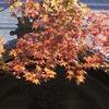 高野山境内の紅葉