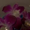 花に溶ける