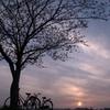 春の風景-夕