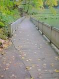 道の駅名水の郷きょうごくの落ち葉