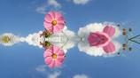 ピンクの花びら!