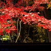 秋の紅葉スペシャル^^