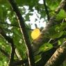 葉緑の中、映える黄葉