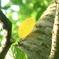 葉緑の中、映える黄葉2