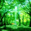 森の中の十字架の海
