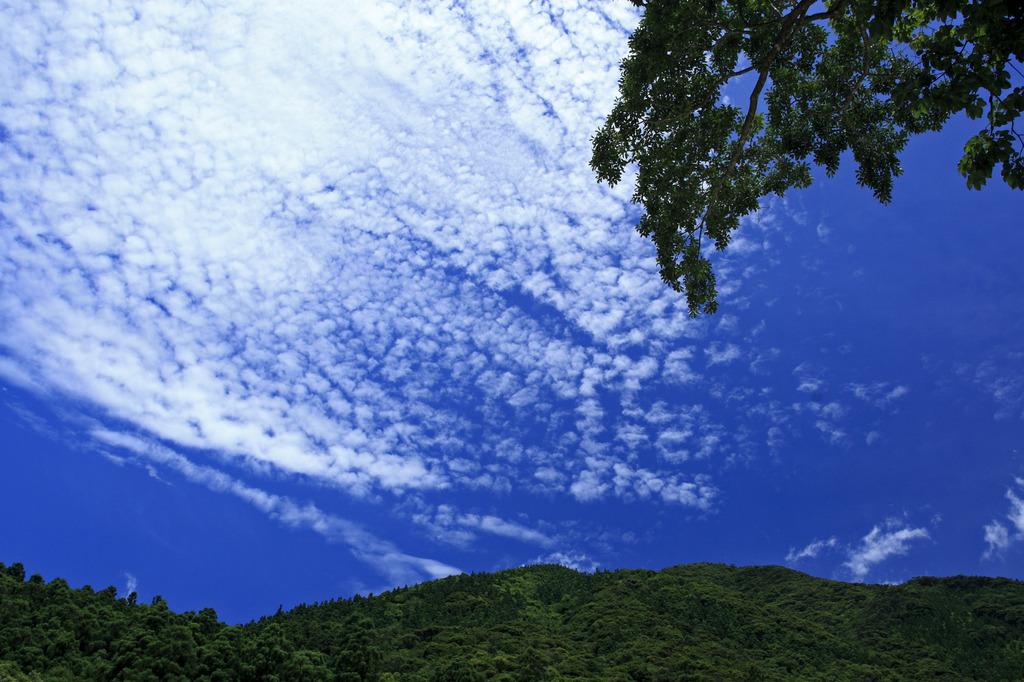 木陰から見上げた夏の空