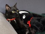 この子は黒猫のジジ