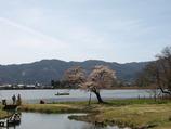 平安郷 池と桜
