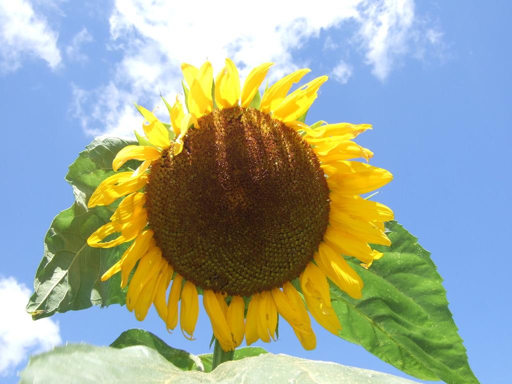 照りつける太陽?