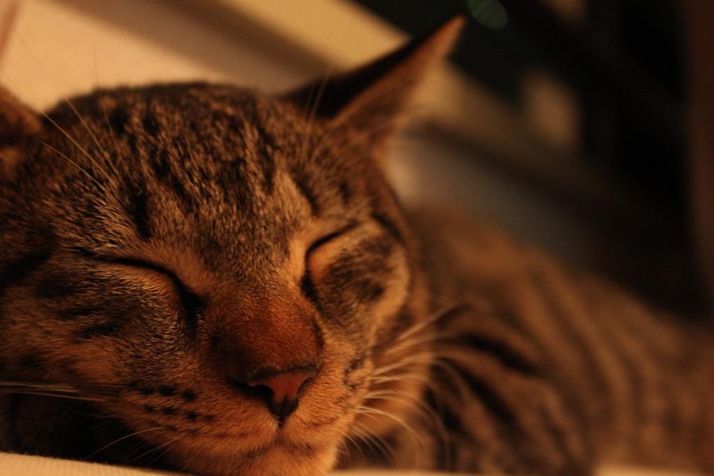 おやすみレイン