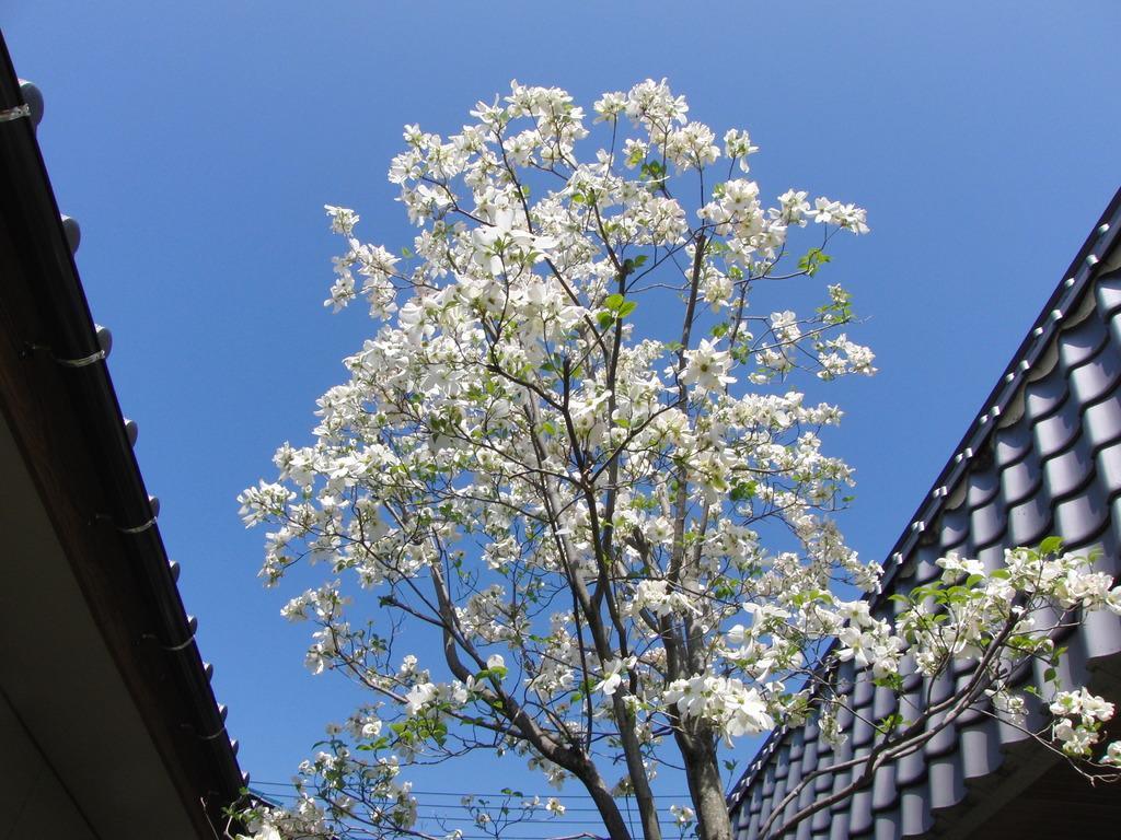 近所の木(1)