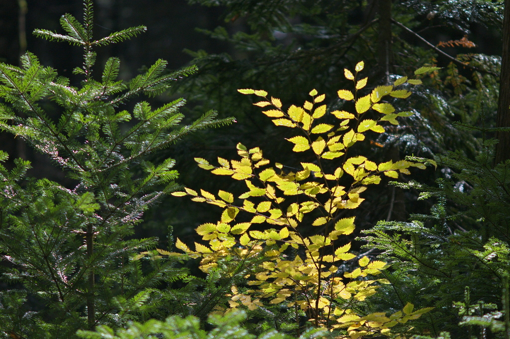 森の中で_1
