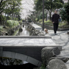 桜咲く散歩道