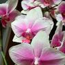 SIGMA SIGMA DP2で撮影した植物(花2)の写真(画像)