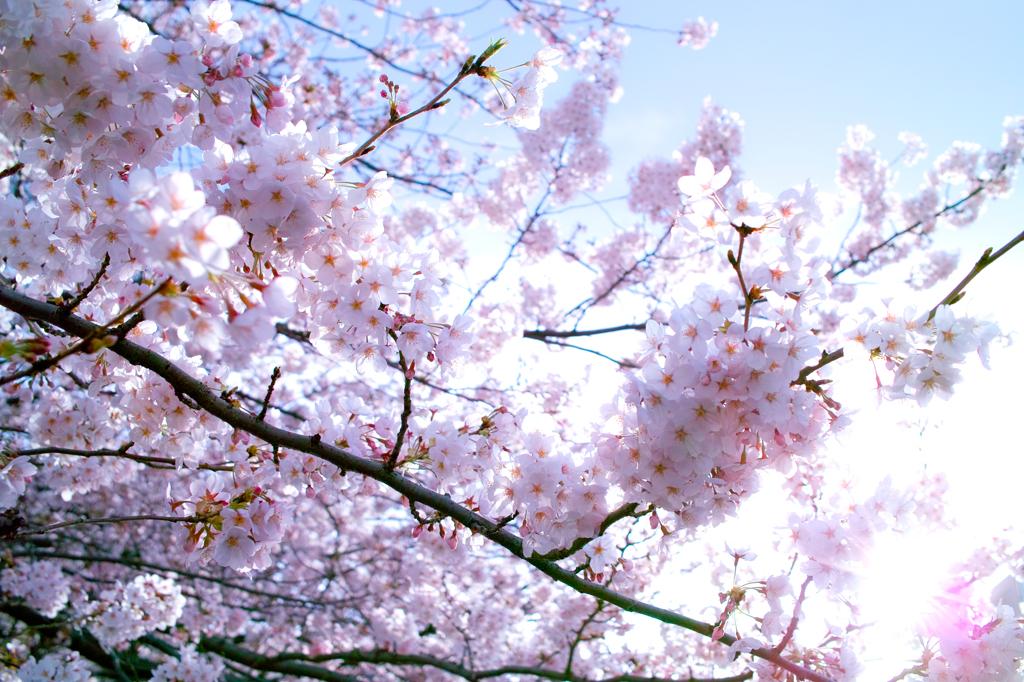 青とピンクと太陽と