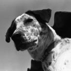 EPSON EPSON scannerで撮影した動物(inu)の写真(画像)