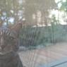 SIGMA SIGMA DP2で撮影した動物(猫)の写真(画像)