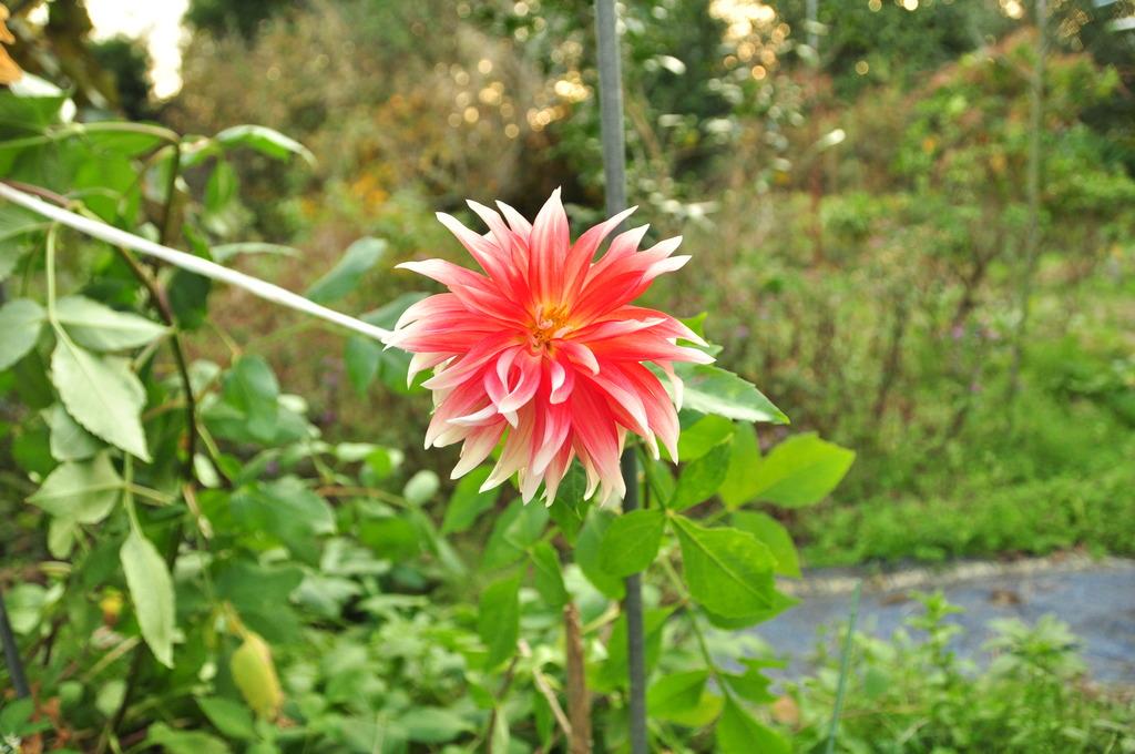 庭に咲いていた花。