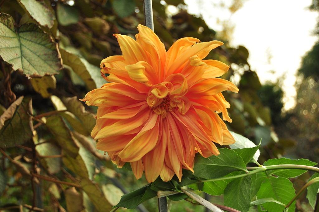 庭に咲いていた花2。