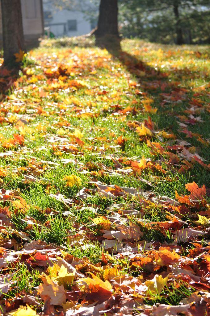 朝の落ち葉