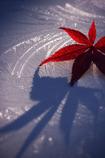 秋から冬への滑走