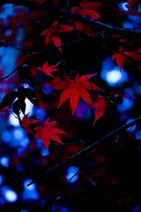 紅葉0905