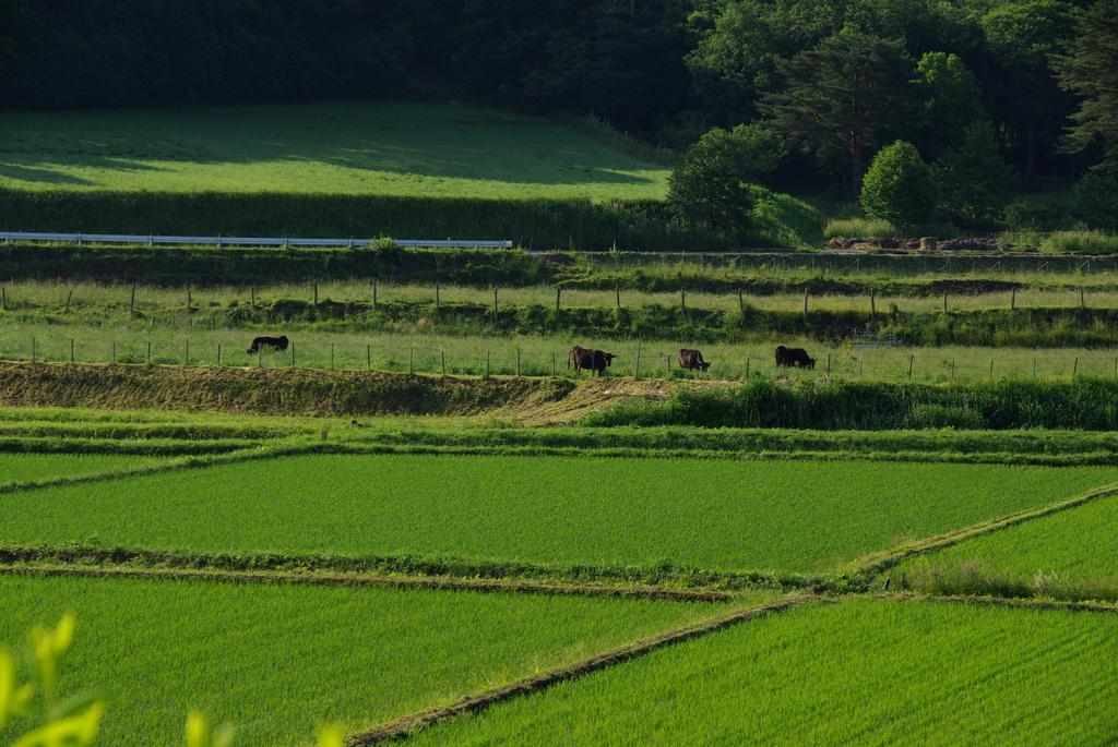 減反した放牧地に放牧されている牛たち