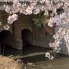 桜とレンガ橋