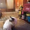 店の看板猫
