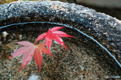 秋色が浮かぶ