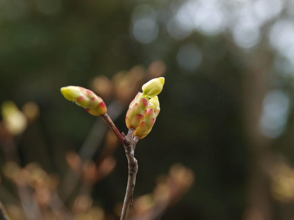 春を散策3