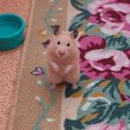 OLYMPUS E-520で撮影した動物(キンクマのルルちゃん)の写真(画像)