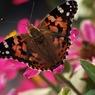 OLYMPUS E-520で撮影した植物(蝶・・・?)の写真(画像)