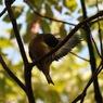 OLYMPUS E-520で撮影した動物(P0304356)の写真(画像)