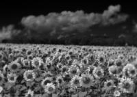 RICOH IMAGING PENTAX K-3で撮影した(8月の密度)の写真(画像)