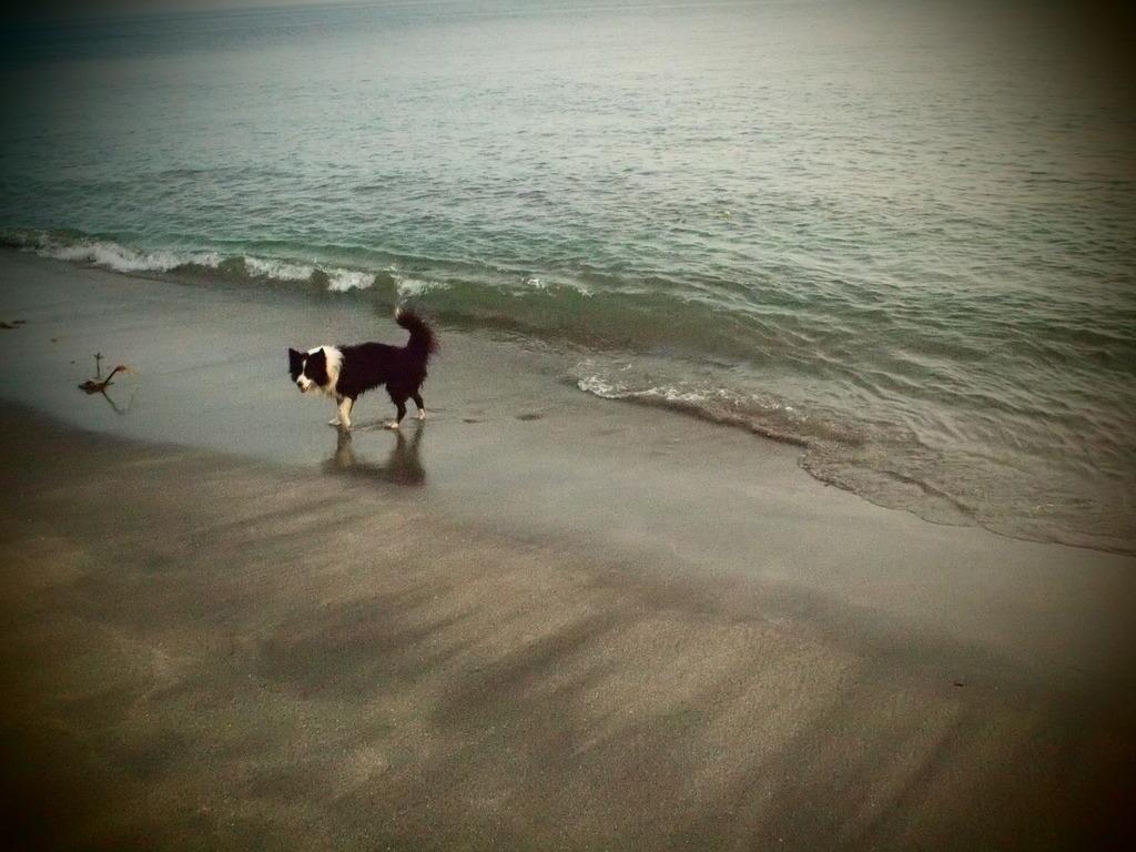 それでも海が好きだから