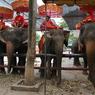 NIKON NIKON D70で撮影した動物(アカ族とゾウ)の写真(画像)