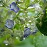 SONY DSLR-A200で撮影した植物(活き活き)の写真(画像)