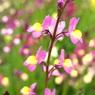 SONY DSLR-A200で撮影した植物(colorful)の写真(画像)