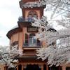 明治と桜花