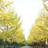 黄葉の名所