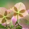 SONY DSLR-A100で撮影した植物(幻想的・・・)の写真(画像)