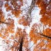 秋色を仰ぐ