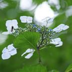 SONY DSLR-A200で撮影した植物(季節の花)の写真(画像)